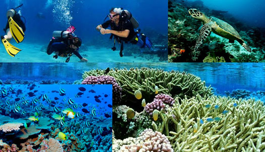 diving and snorkeling in Sri Lanka (4)
